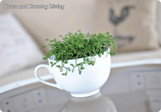 Mossy Fern