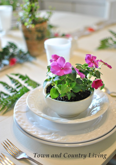 Impatiens at Table Setting