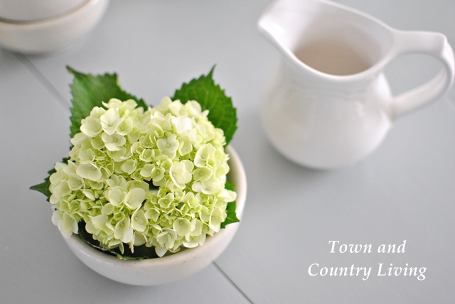 White Ironstone and Hydrangea