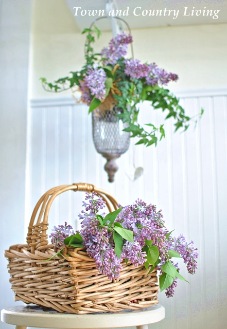 English Ivy and Lilacs