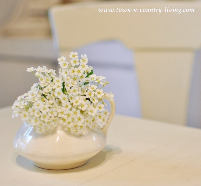 Bridal wreath flowers in a white ironstone creamer
