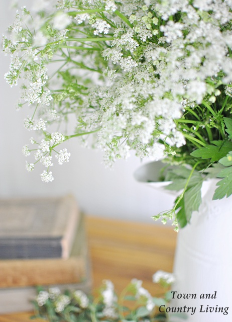White wildflowers - Town and Country Living