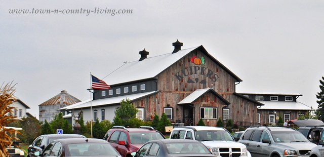 Apple Picking at Kuiper's Family Farm