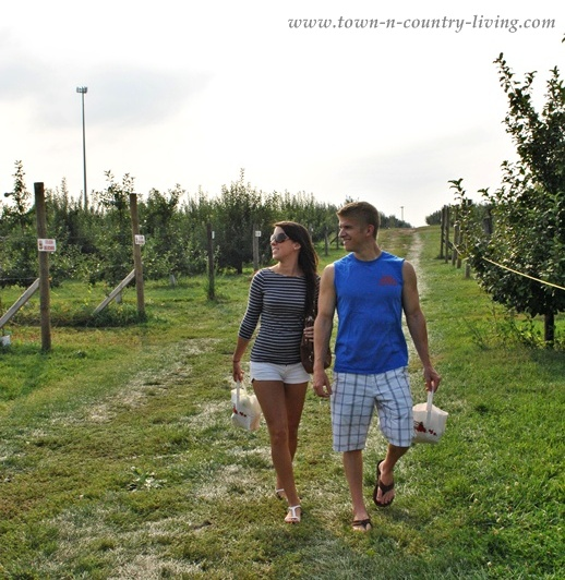 Apple picking in Illinois at Kuiper's Family Farm