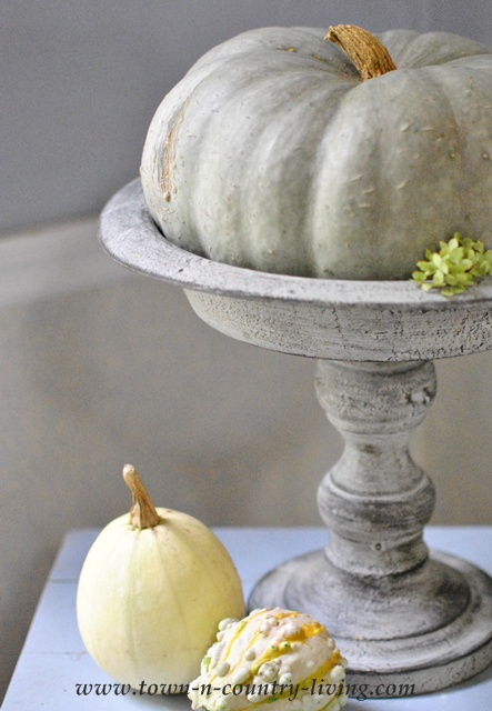 Blue Moon Pumpkin with Fall Gourds via Town and Country Living