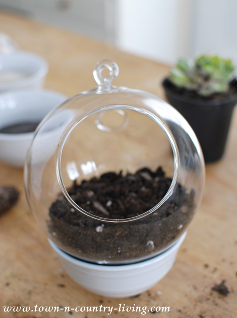 Fill globe terrarium with organic dirt for planting succulents