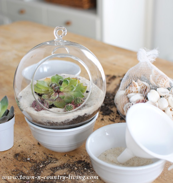 Adding crushed shells to hanging globe terrarium