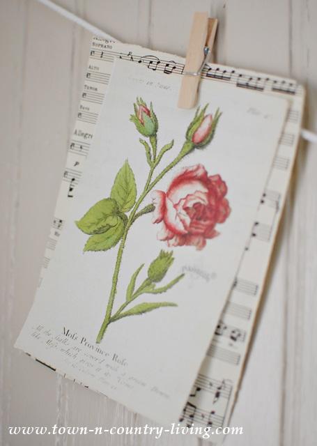 Rose Botanical Print