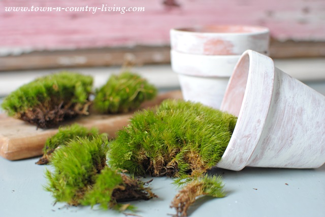 DIY Moss Recipe