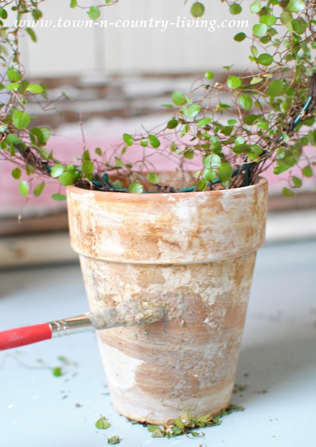 How to grow moss on a clay pot