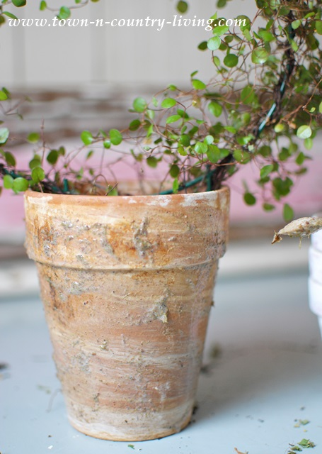 How to grow moss on garden pots