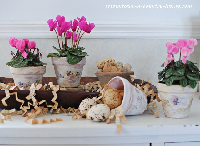 Mini Pink Cyclamen in Whitewashed and Aged Clay Pots