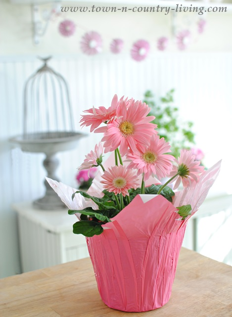 Pink Gerbera Daisy for Spring Vignette