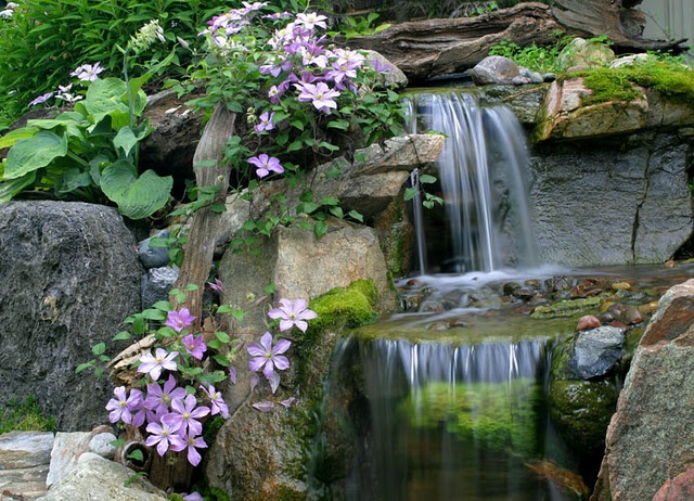 Backyard Waterfalls with Vining Clematis