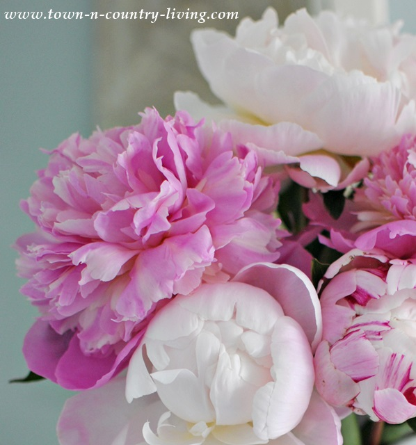 A Bunch of Pink Peonies