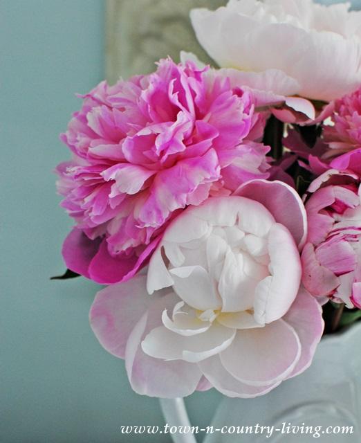 Fragrant Pink Peonies