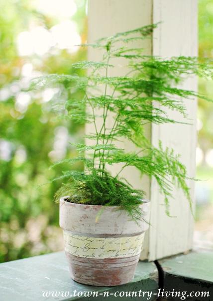 Mossy Fern in Aged Terra Cota Pot