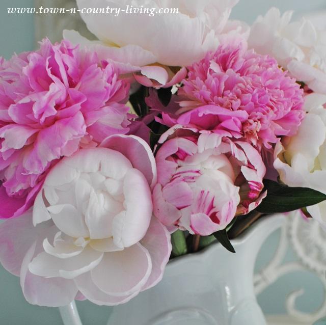 Floral Arrangement of Pink Peonies