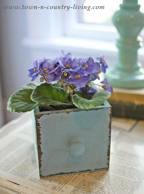 Summer Decorating Ideas -Violets in a Painted Drawer