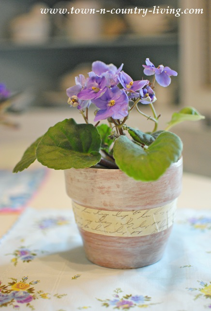 African Violet in Altered Clay Pot