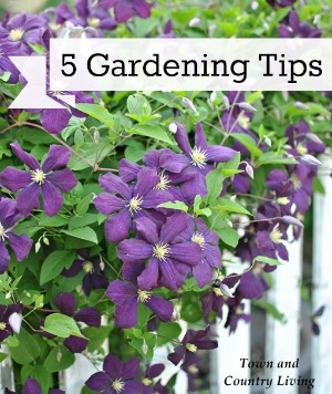 5 Tips for Successful Flower Gardening