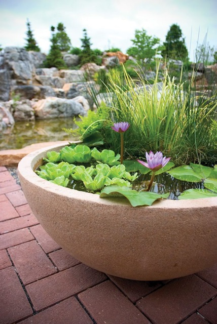 Patio Pond with Aquatic Plants