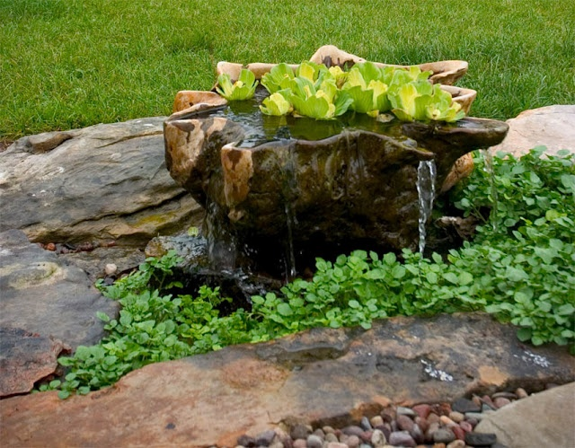 Teak Bowl Container Water Garden