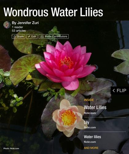 Water Lilies Flipboard Magazine
