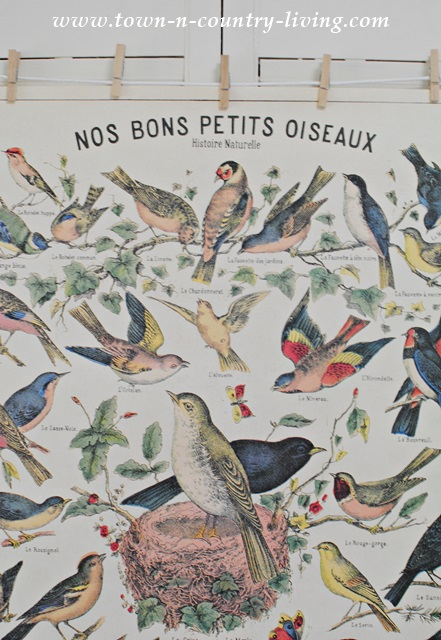 """Vintage Bird Poster - """"Our Good Birds"""" in French"""