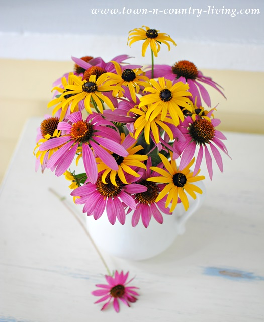 Coneflowers and Rudbeckias in white ironstone pitcher
