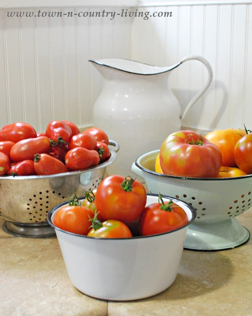 Tomatoes ready for canning and preserving
