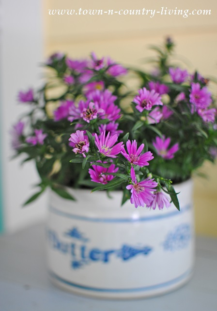 Asters in an old butter crock