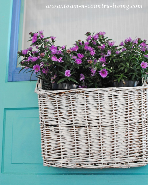 Purple asters tucked into a shabby chic white basket and hung on the front door.