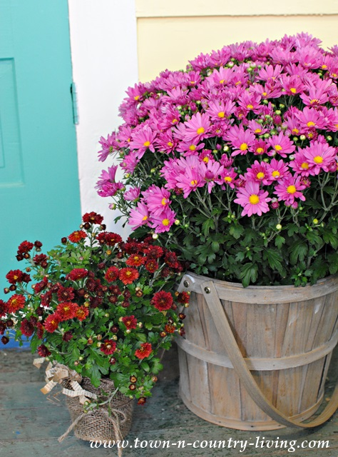 Basket of mums create instant fall decorating on a farmhouse porch