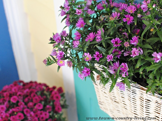 Fall Asters in a White Basket on the Front Door - instant cottage charm!