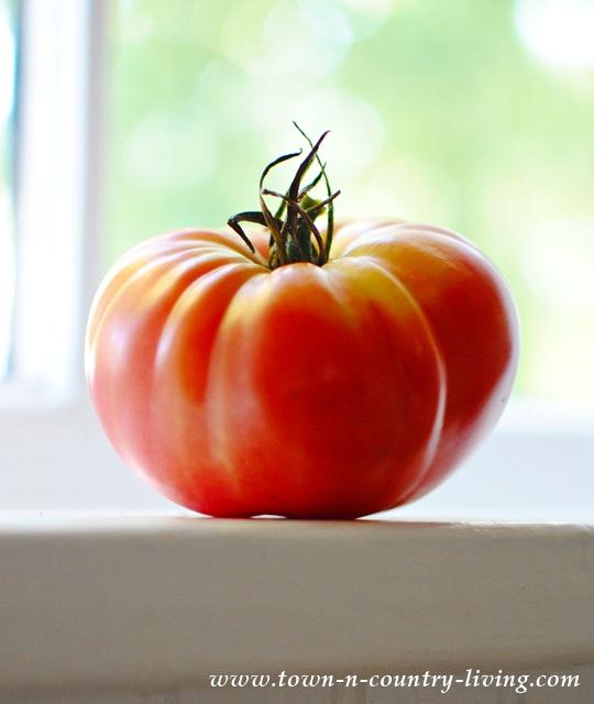 Tomato on a Farmhouse Kitchen Windowsill
