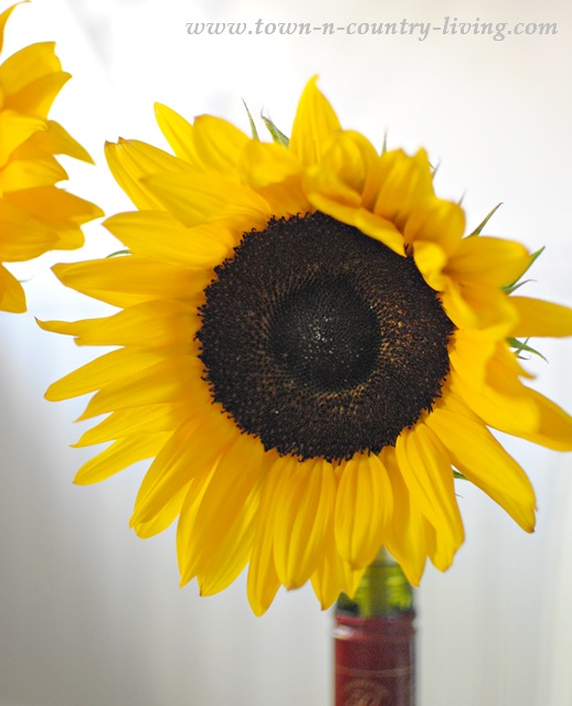 Sunflowers make great home decor in late summer and early fall