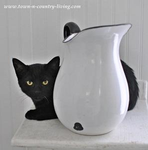 Black Cat for Halloween