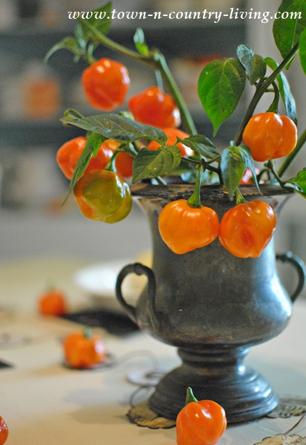 Halloween Centerpiece using Orange Habanero Peppers