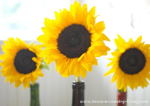 Trio of Simple Sunflowers