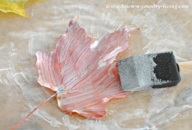 How to use Mod Podge to preserve Fall leaves