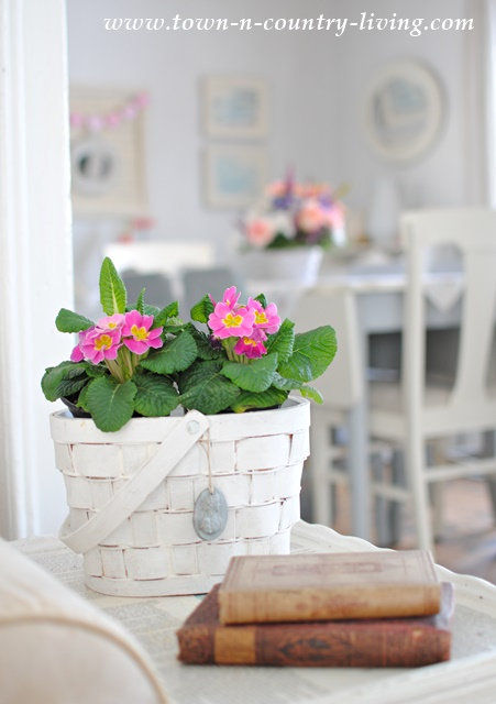 Basket filled with primroses in a farmhouse living room