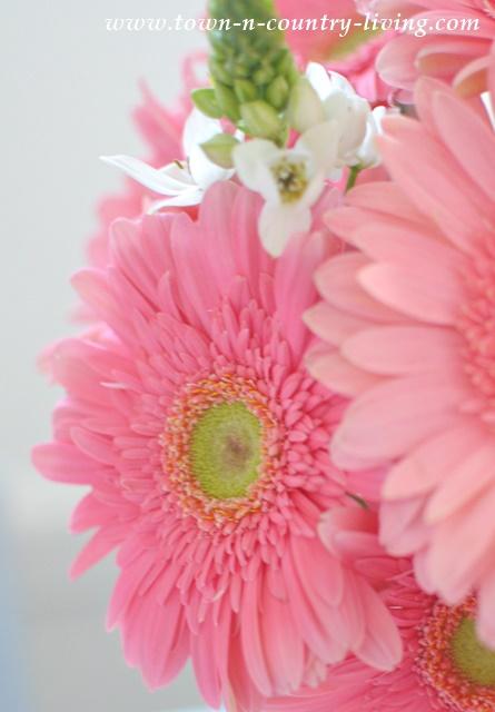 Pink Gerbera Daisies Make Great Cut Flowers for Arrangements