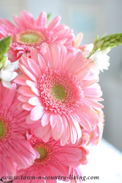 Beautiful Pink Gerbera Daisies