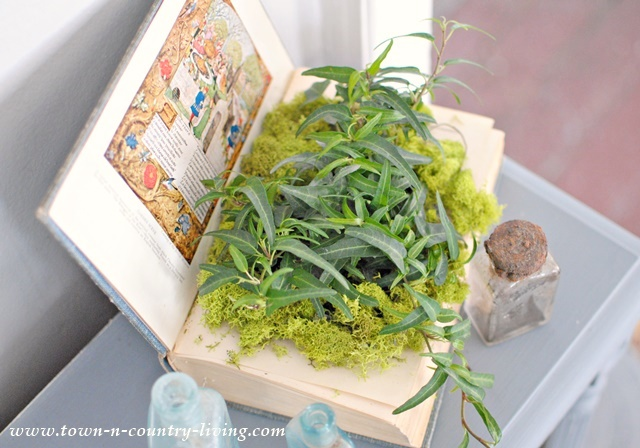 Plant an ivy in an altered book.