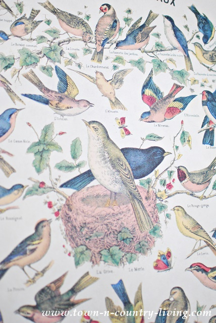 Bird Poster on my Spring Mantel