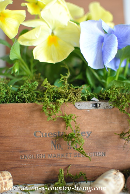 DIY Cigar Box Planter
