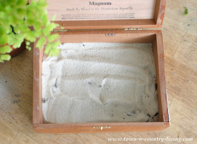 How to make a cigar box planter