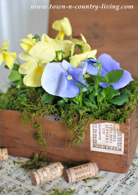 Cigar Box Planters with Pansies