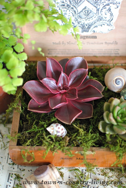 DIY Cigar Box Planter with Succulents